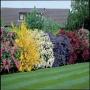 Kolekce do truhlíků 4 druhy pestrobarevných listnáčů