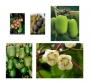 Kolekce Kiwi 5 kusů