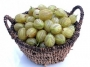 Ribes uva-crispa spinefree