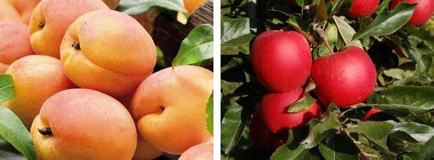 ovocne2.jpg, 38kB